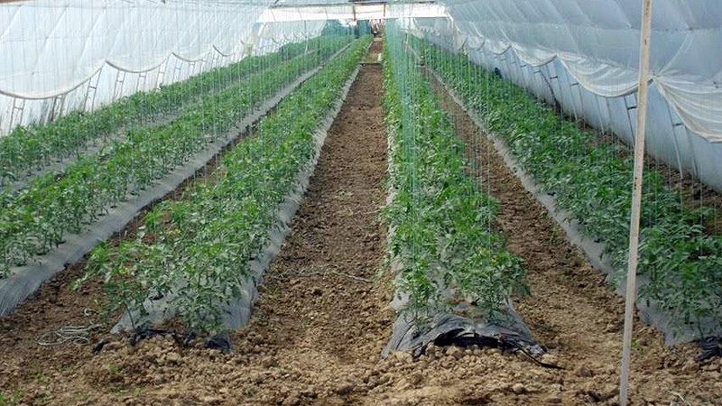 Raspisana četiri javna poziva za subvencionisanje poljoprivrednih gazdinstava